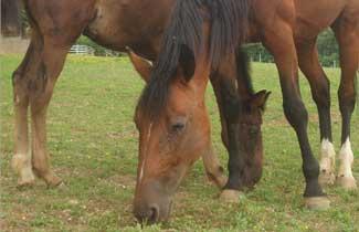 Centre équestre de Bertaucourt - Les chevaux