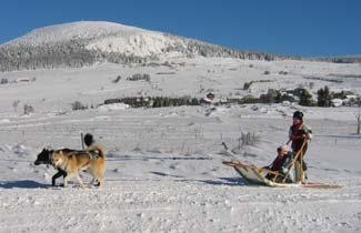 Activité chiens de traîneau au Mézenc