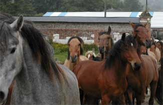 Domaine du Lieu Dieu - Lâché de chevaux