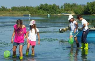 Activité pêche à pied - Classe de mer - Barcares
