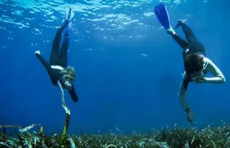 Séjours Odel - Plongée en apnée